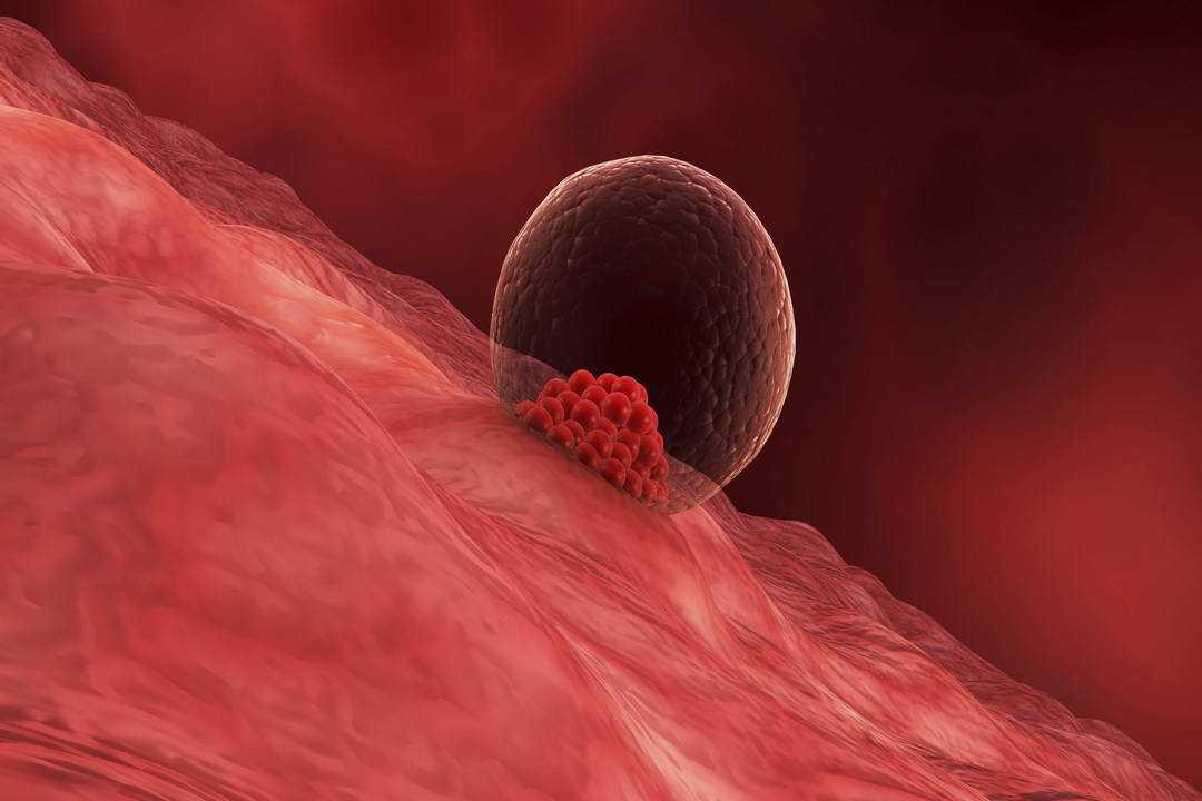 Как происходит имплантация эмбриона при эко