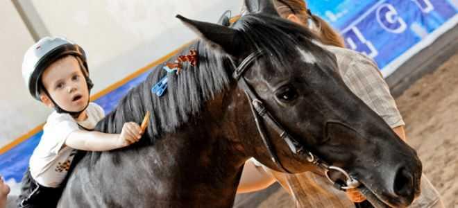 Доктор лошадь. как иппотерапия помогает вреабилитации неизлечимых больных. новости общества