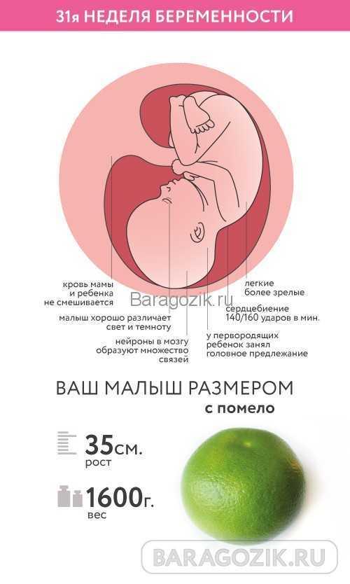 28 неделя беременности: что происходит с малышом и будущей мамой, анализы, фото и узи