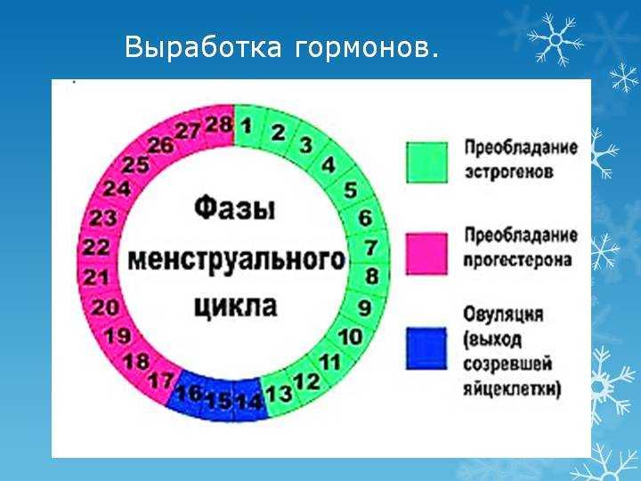 На какой день наступает овуляция после месячных? | симптомы и лечение урогенитальных заболеваний – noprost.ru