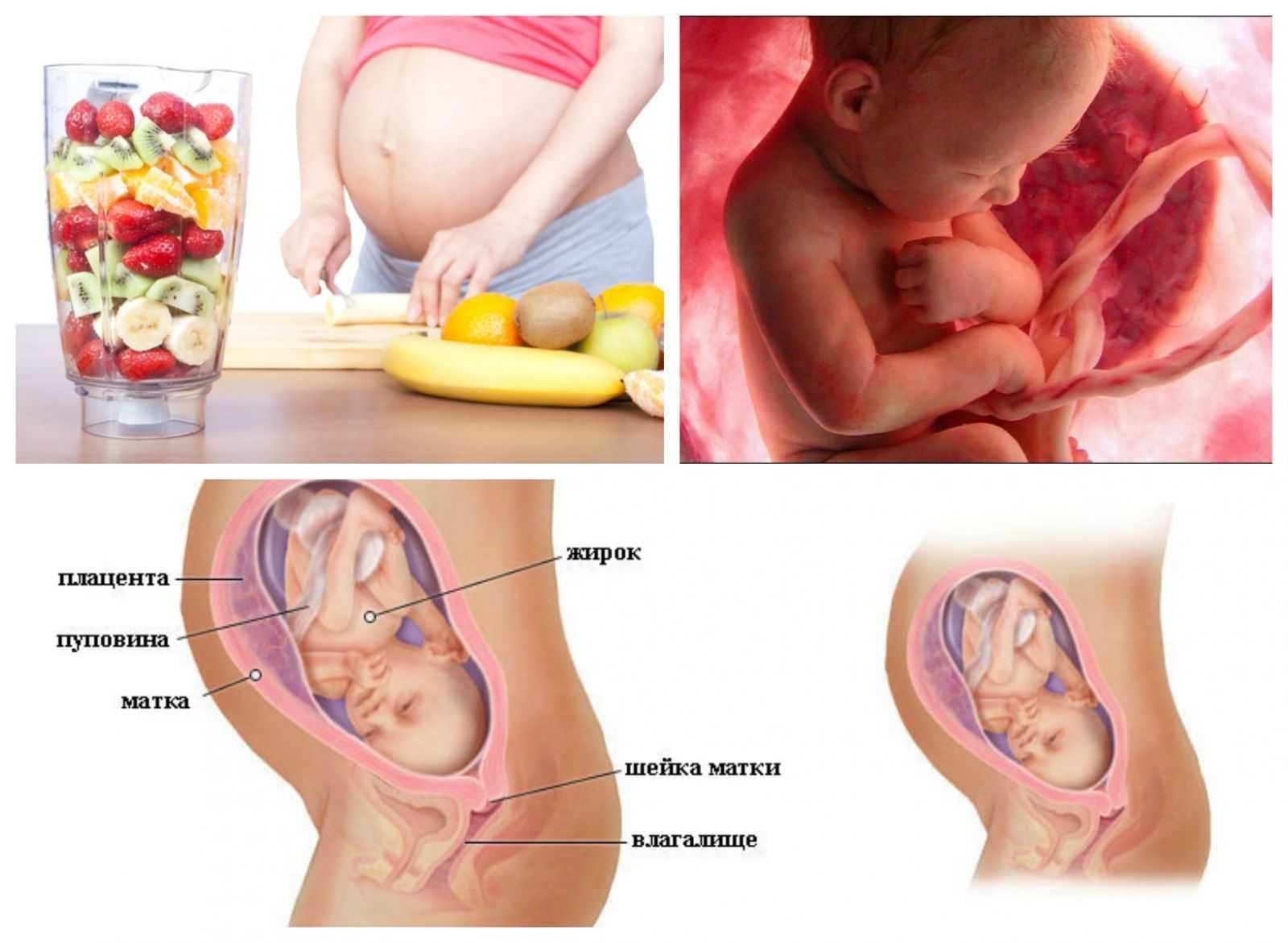 Развитие плода на 29 неделе беременности (11 фото): вес и рост ребенка, что происходит с малышом на 28-29 неделе, ощущения если толкается внизу живота