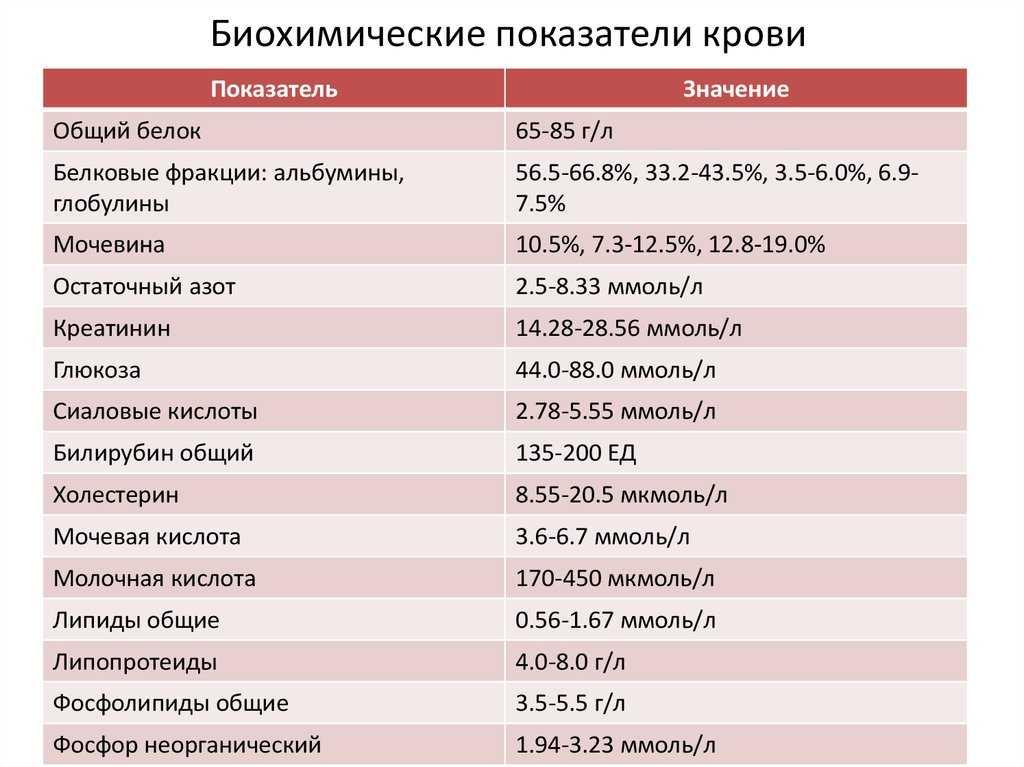 Биохимический анализ крови при беременности: нормы и расшифровка показателей