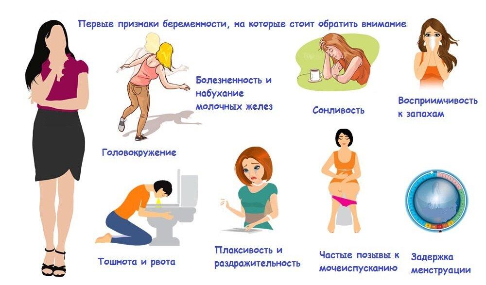 Первый триместр – я беременна