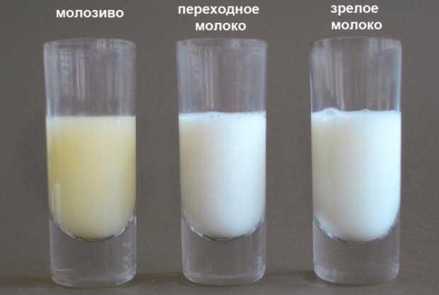 Почему нет молока после родов и как ускорить приход