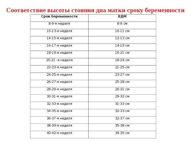 Нормы длины шейки матки по неделям при беременности: таблица со значениями