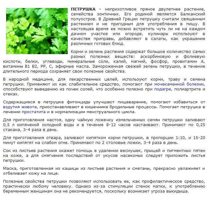 Душица при беременности. можно ли пить душицу при беременности на ранних и поздних сроках - wikiorganizm.ru