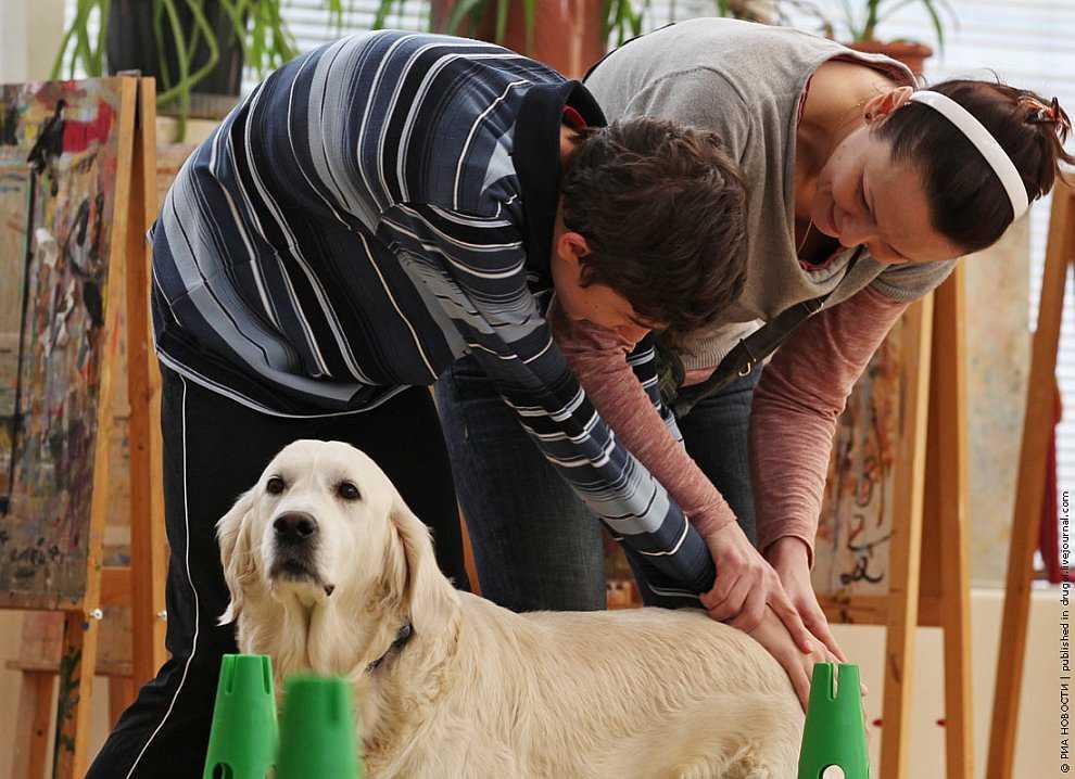 Лечение собаками, или канистерапия: что это такое и как проходит реабилитация детей с аутизмом?