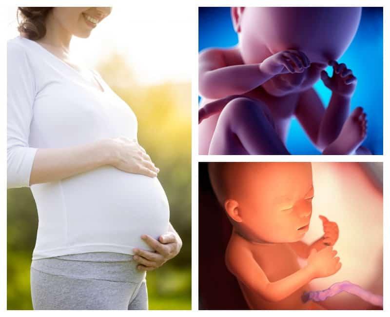 23-я неделя беременности