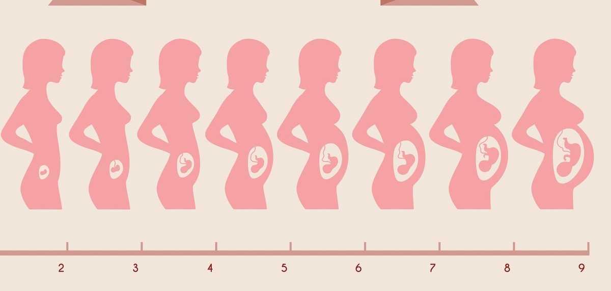 Беременность по неделям: 40 недель на пути к счастью