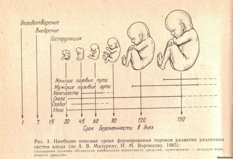 Развитие плода на 11 неделе беременности (19 фото): что происходит с малышом, ощущения плода и размеры ребенка