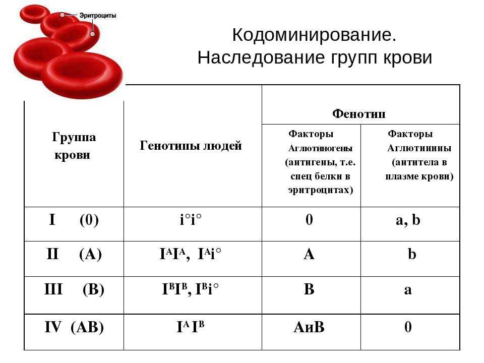 Какая группа крови и резус-фактор будет у вашего ребенка?