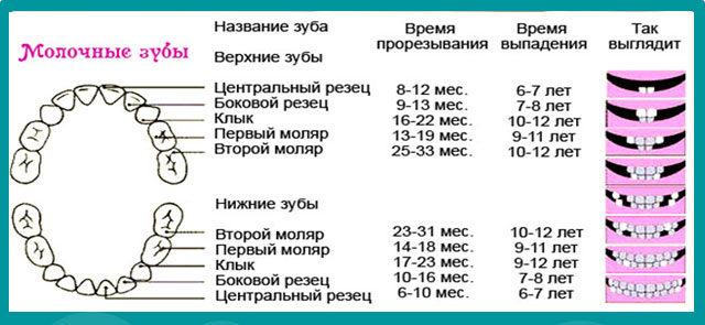 Последовательность прорезывания зубов у детей (12 фото): как лезут зубы, симптомы