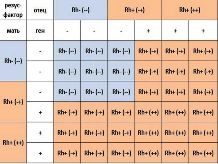 Анализ крови на группу и резус-фактор: сдать, откуда берут, определение, сколько делается, натощак или нет, расшифровка