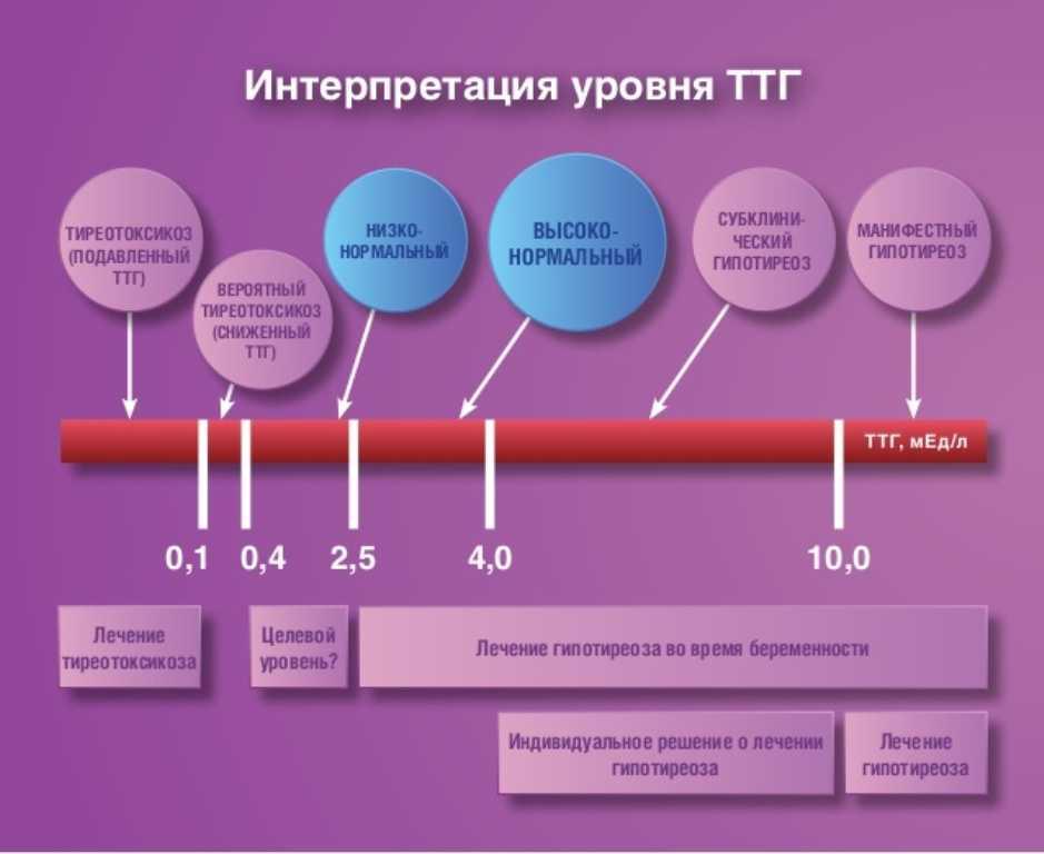 Норма ттг при беременности по триместрам и при планировании