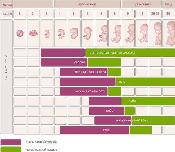 Как рассчитать срок беременности точно – все методы расчета сроков беременности
