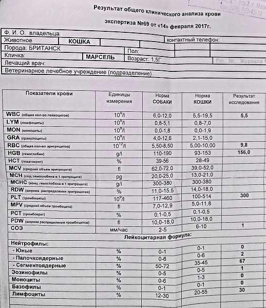 Анализ на глисты – виды анализов, как подготовиться и сдавать