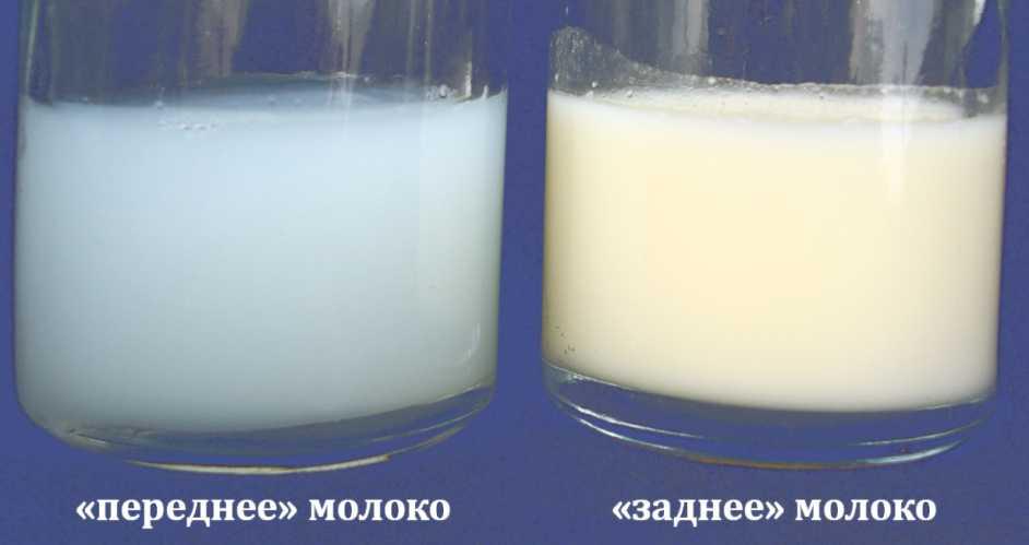 Грудное молоко - состав, жирность грудного молока