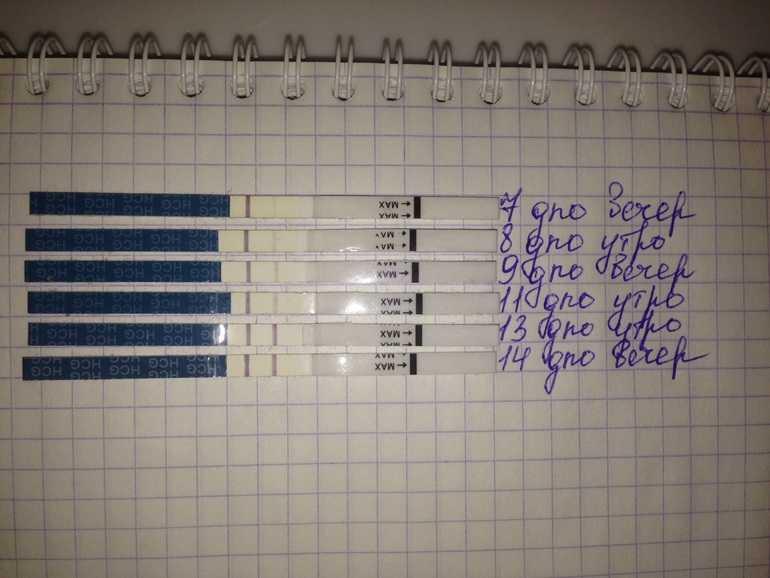 Календарь беременности: рассчитать онлайн для беременных. особенности расчета и интерактивный акушерский календарь 2020. расчет по триместрам, месяцам, неделям и дням