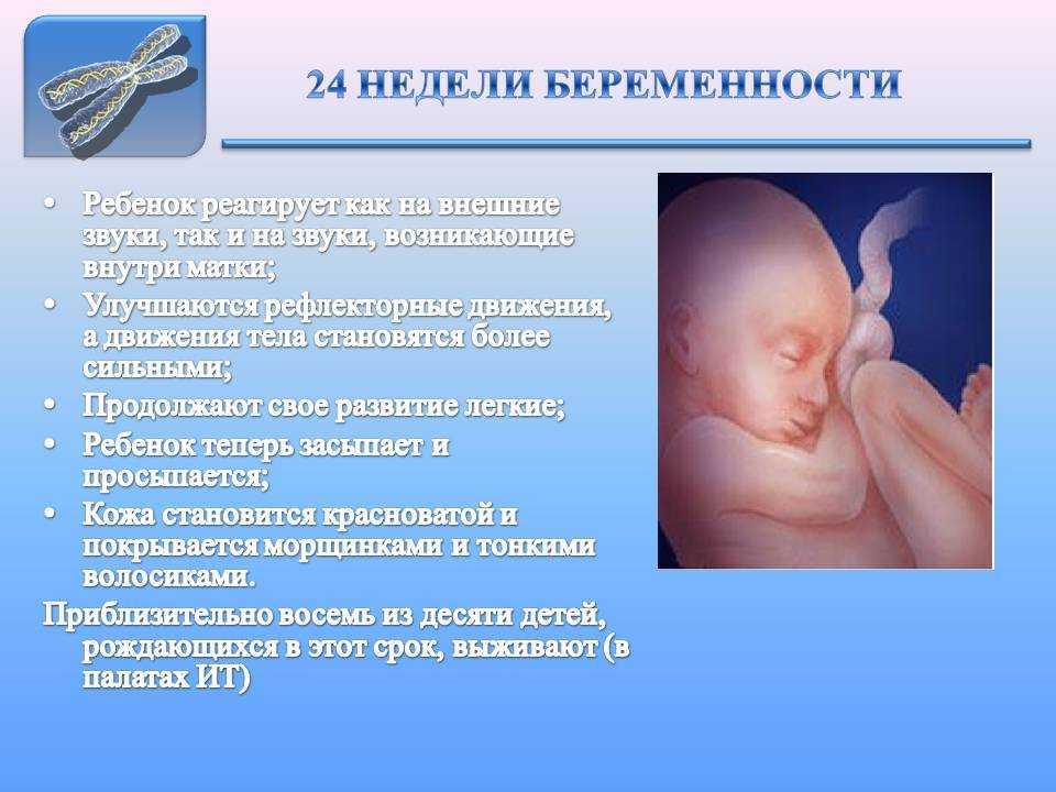 24 неделя беременности: мама, развитие плода, шевеления