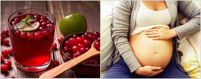 Клюква при беременности. польза, противопоказания. можно ли употреблять клюкву по время беременности