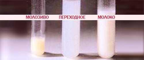 Молозиво при беременности: время появления, свойства и цвет, отклонения от нормы / mama66.ru