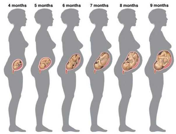 Четвертый месяц беременности (24 фото): развитие плода и ощущения беременной, размер живота и как он выглядит
