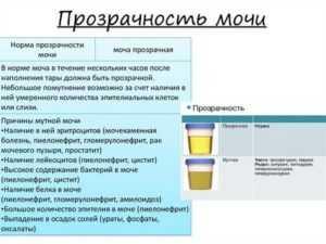 Мутная моча при беременности: причины в первом, во втором и третьем триместрах : saluma.ru