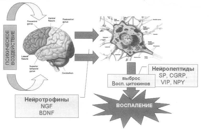Психосоматика бронхиальной астмы: причины возникновения