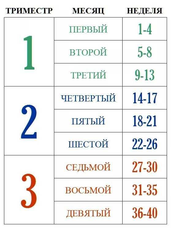 Триместры беременности по неделям - таблица: с какой недели начинается второй и третий триместры