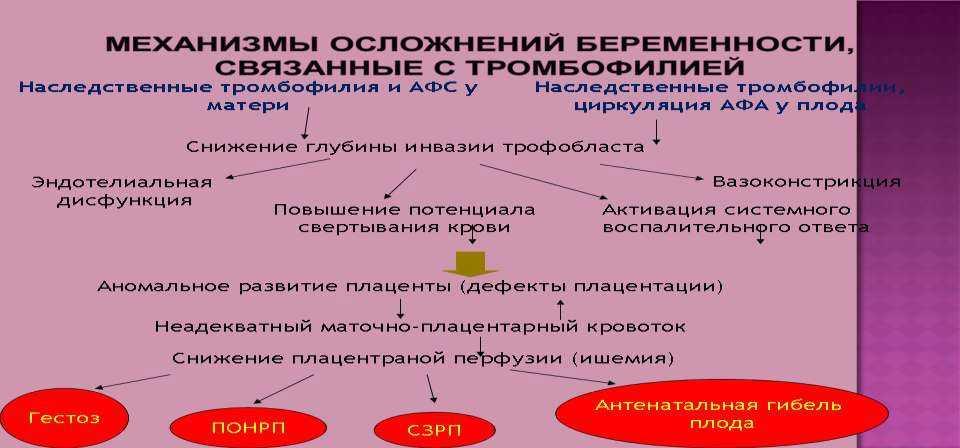 Тромбофилия - что это такое? риски при беременности, виды и лечение