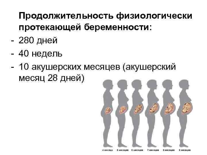 Все триместры беременности по неделям с указанием самых опасных периодов