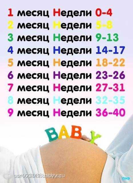 Календарь беременности по неделям, месяцам и триместрам