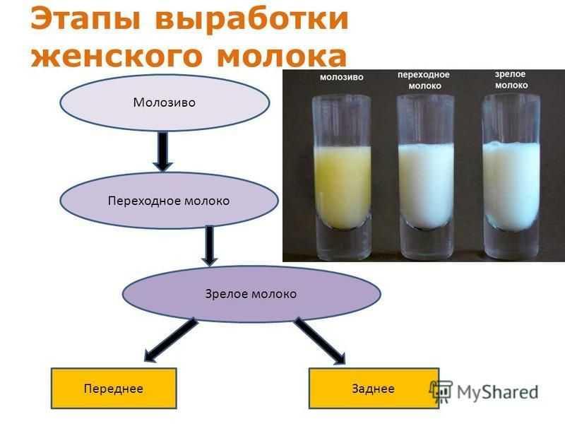 Как вырабатывается молоко у беременных и когда появляется