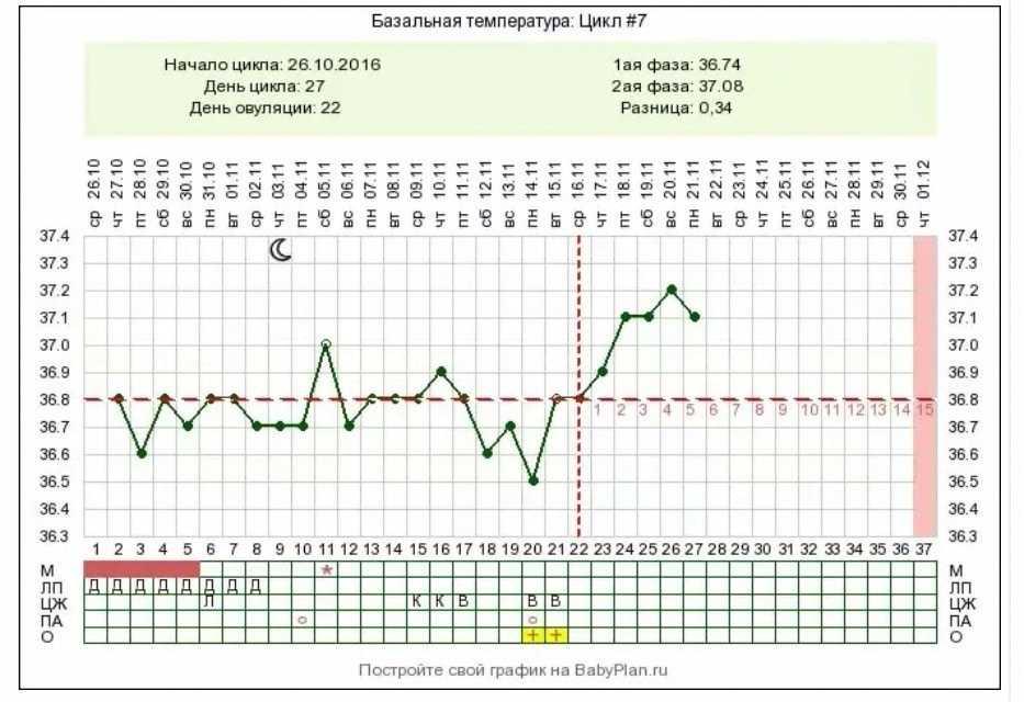 Базальная температура при овуляции - какая бт должна быть, измерение, график