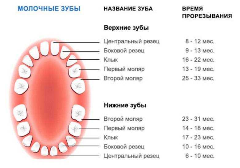 Сколько зубов должно быть у ребенка в 1 год (нормы и отклонения)