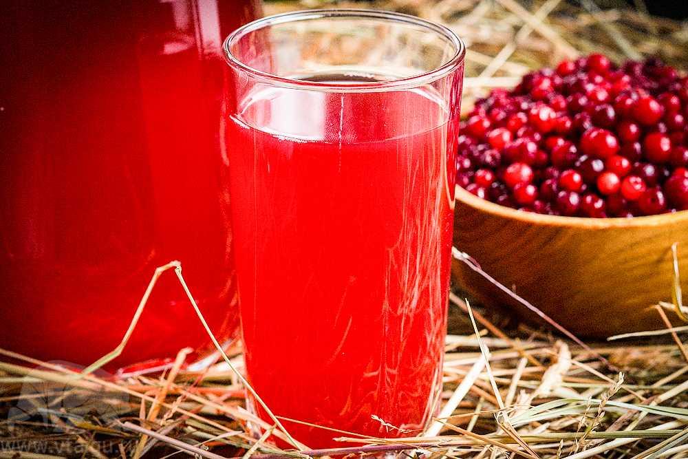 Брусника: польза и вред, лечебные свойства листьев и ягод