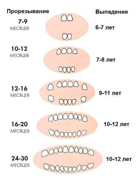 Зубы у детей в 7 лет