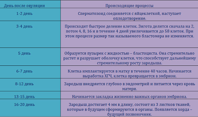 Коричневые выделения после овуляции: что означают такие выделения до месячных и через неделю после овуляции