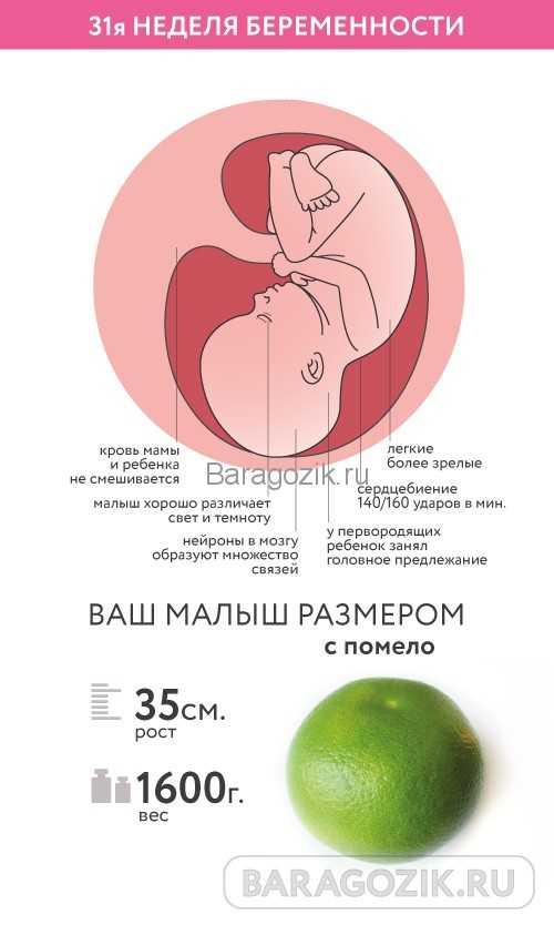 8 месяц беременности: ребенок и боли в животе на этих неделях