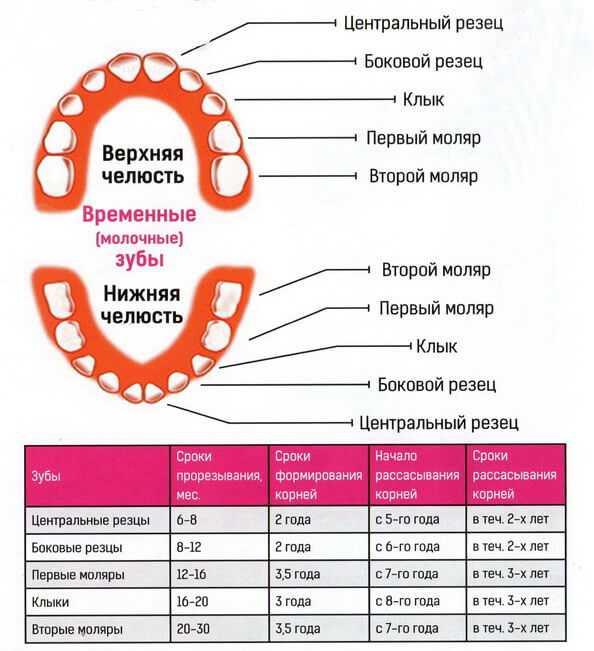 Глазные зубы: прорезывание клыков у детей - симптомы, фото, сроки выпадения