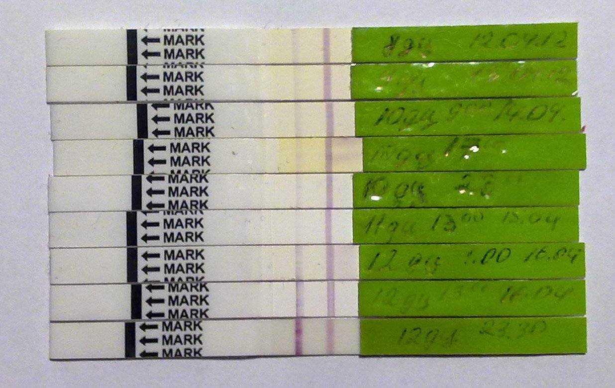 Тест на беременность по дням (25 фото): динамика после овуляции на 5, 6, 7, 8, 9, 10, 11, 12 и 13 дпо, результаты после задержки