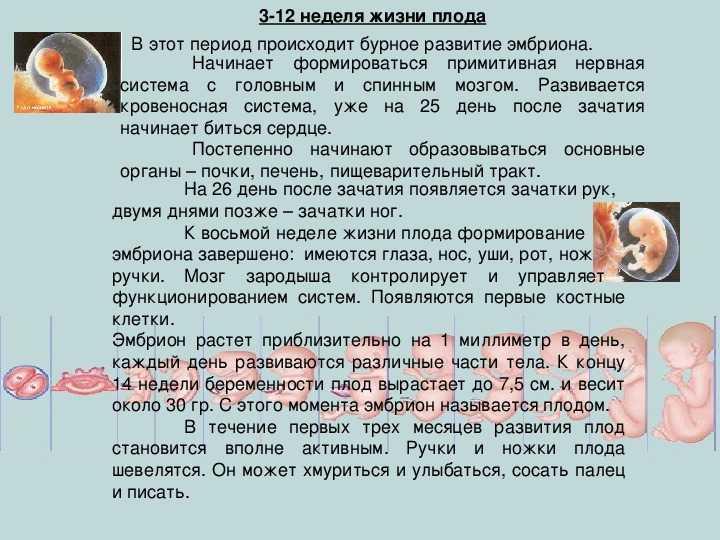 Сколько недель длится беременность у женщин с момента зачатия - goodmummy.ru