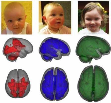 Незрелость коры головного мозга ребенка лечение - медицина - здорово!