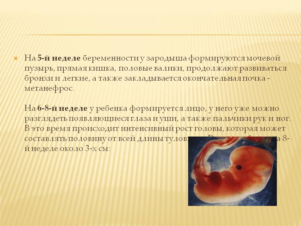 5 неделя беременности: что происходит с малышом и мамой