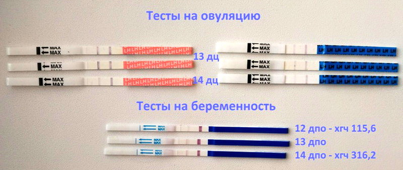 Показывает ли тест на овуляцию беременность? можно ли использовать до задержки вместо теста на беременность?