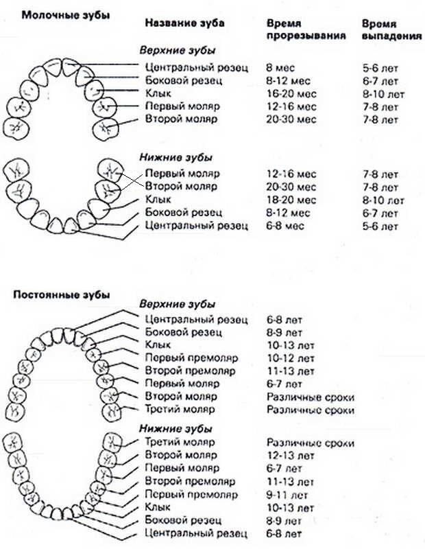 Прорезывание жевательных зубов у детей: симптомы, сроки появления, последовательность и другие аспекты
