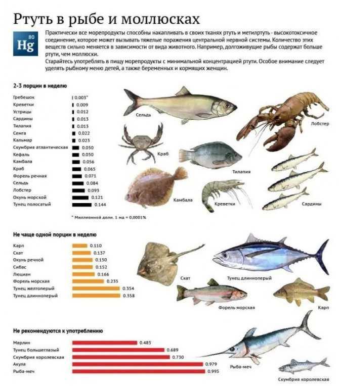Можно ли копченую рыбу при грудном вскармливании