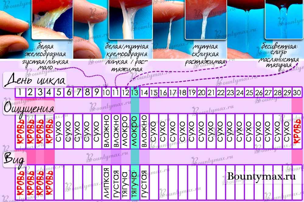 Калькулятор овуляции: подбор благоприятных для зачатия дней онлайн