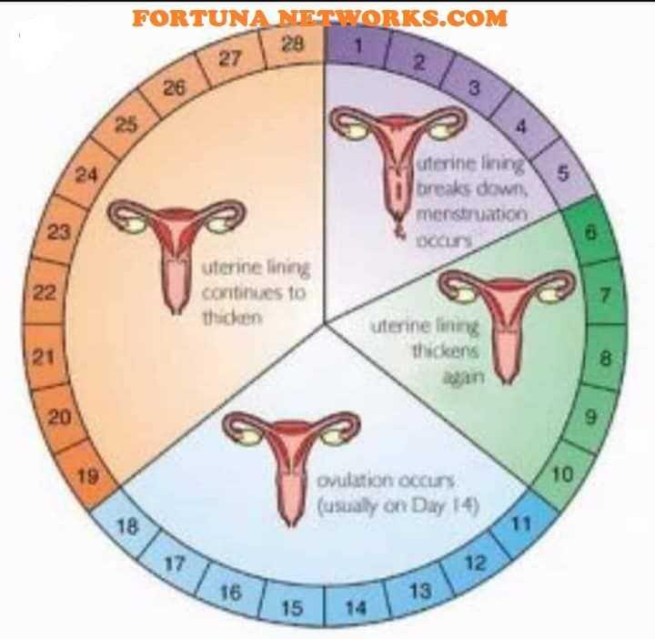 Всё о женской и мужской фертильности. восстановление фертильности