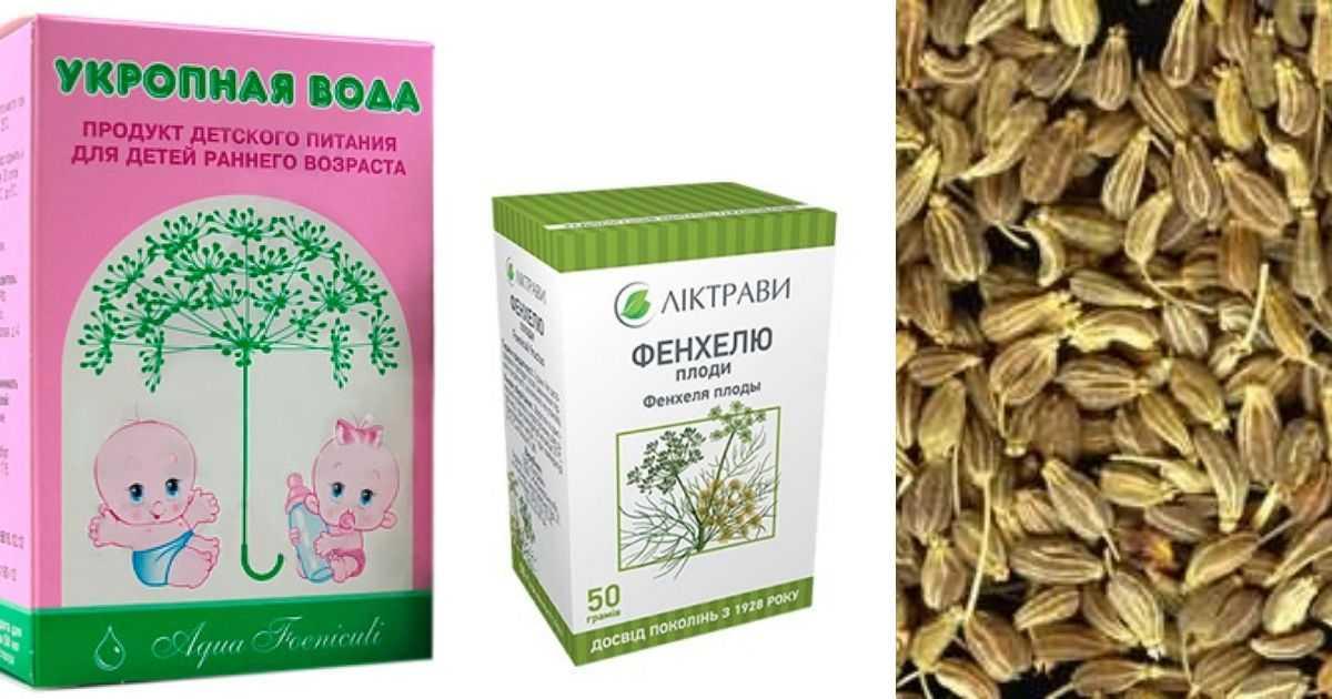 Семена укропа: лечебные свойства и противопоказания, от чего помогают и как применять, польза и вред, рецепты народной медицины (от давления)
